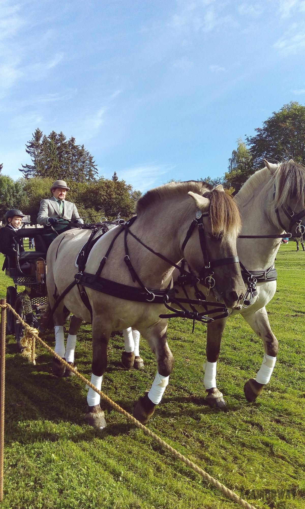 Liv i stuer og tun – horse day inHamar.