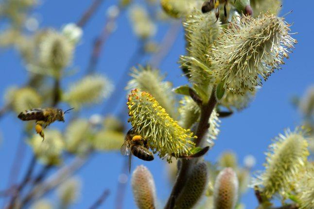bees-bloom-blossom-47311.jpg