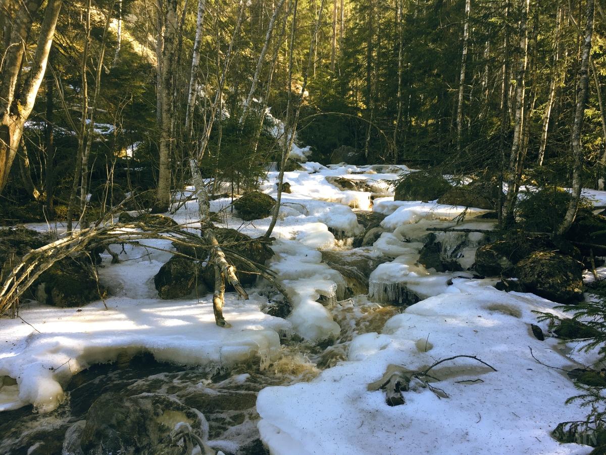 Finnskog forest.