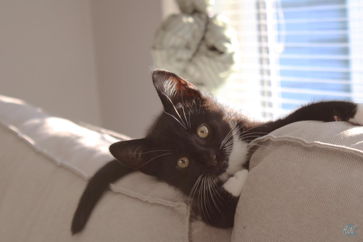 We've got a cat & winter ishere.